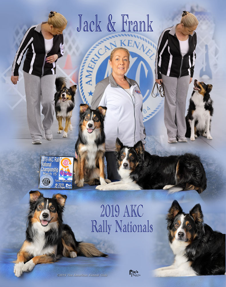 Kim's Dog Coaching - Agility - Obedience and Agility Training